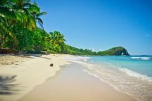 Viator Photo ID: 109109 / Orig name: CaribbeanTortolaBritishVirginIslands_BeachCoconut_shutterstock_147519524.jpg / Source Type: Shutterstock / Source ID: 147519524 / Tags: Caribbean, Tortola, British, Virgin, Islands, Beach, Coconut, Tropical, Palm, Trees / Uploaded by: klinn /