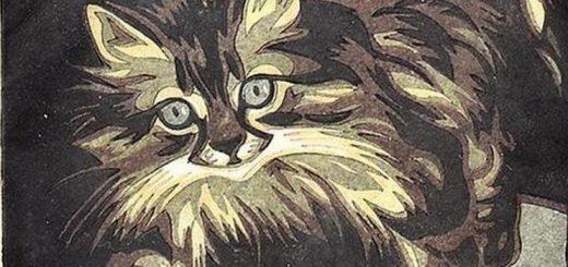"""""""persian cat"""" """"women"""" """"unselfconscious"""" amazon"""